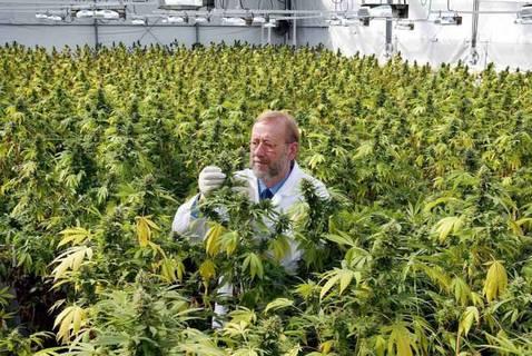 marihuana3